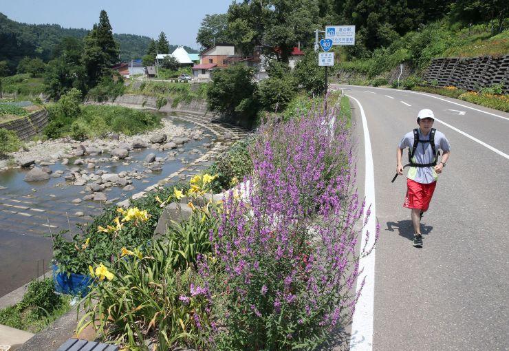 キューピットバレイを目指して国道を走る記者。沿道にさまざまな花が咲いていた=上越市安塚区