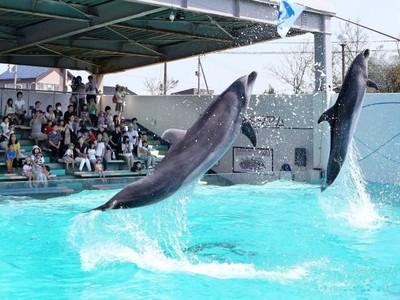 上越水族博物館 イルカショー再び 豪快ジャンプ5連休中も 9月19~23日