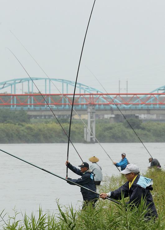 早朝からコロコロ釣りを楽しむ愛好者たちがさおを並べた=富山市の神通川富山大橋付近