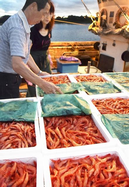漁船から次々と水揚げされる甘エビ=1日、福井県坂井市の三国港