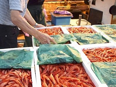 三国港に新鮮甘エビやハタハタ 日本海近海の底引き網漁解禁