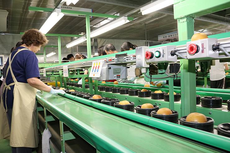 選果場で梨を手に取り、色づきや傷の有無を確認する従業員