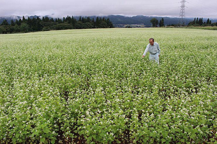 かれんな白い花が一面に広がるソバ畑=小千谷市