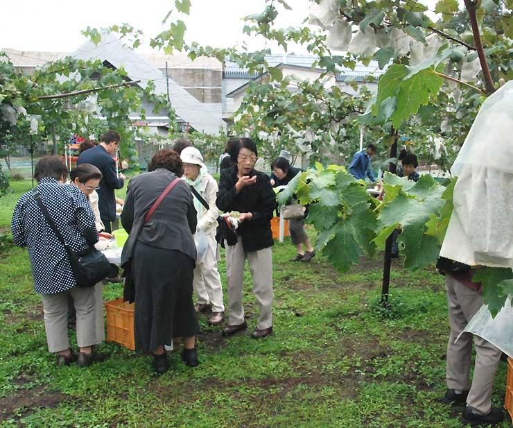 新幹線飯山駅近くの果樹園でブドウ狩りを楽しむ日帰りツアー参加者
