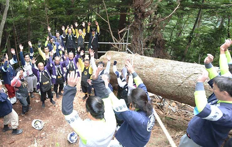 伐採を終えた「本宮一之御柱」(右)の横で万歳をして祝う氏子たち=16日、辰野町の横川国有林