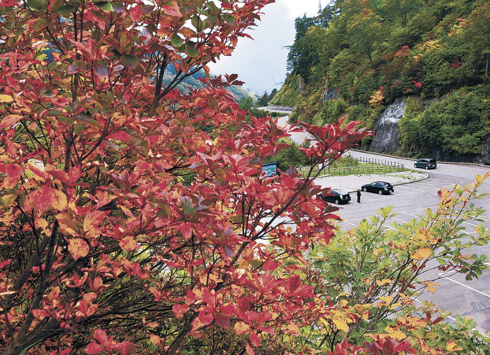 秋が深まり、色づき始めた木々=26日午後1時半、白山白川郷ホワイトロード栂の木台駐車場