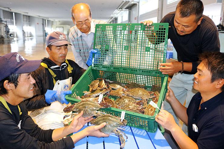 水揚げしたワタリガニを見る東海会長(右)ら協議会のメンバー。三浦事務局長(左)が持つタグ付きのカニは700グラムを超える=新湊漁港