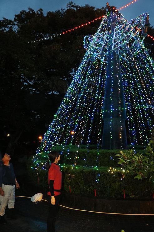 高岡古城公園で点灯が始まったイルミネーション=高岡市古城