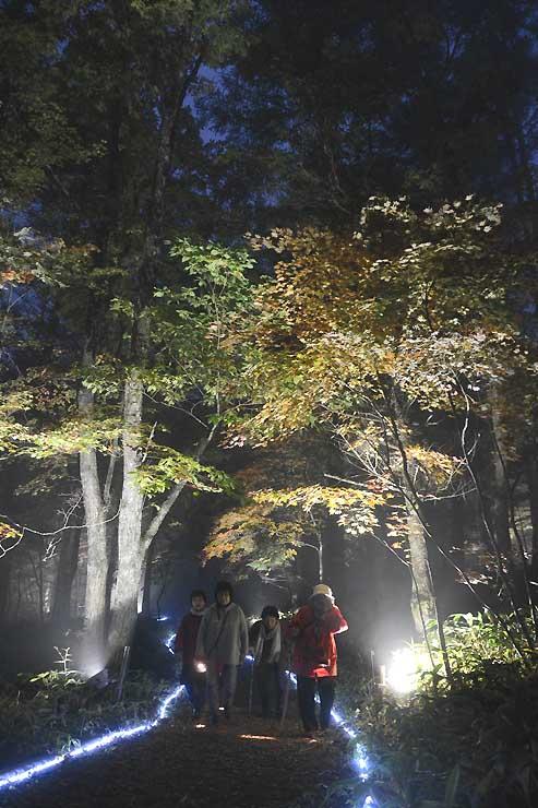 ライトアップされた八千穂高原自然園