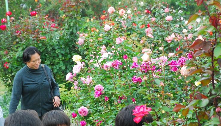 色とりどりのバラが咲く一本木公園