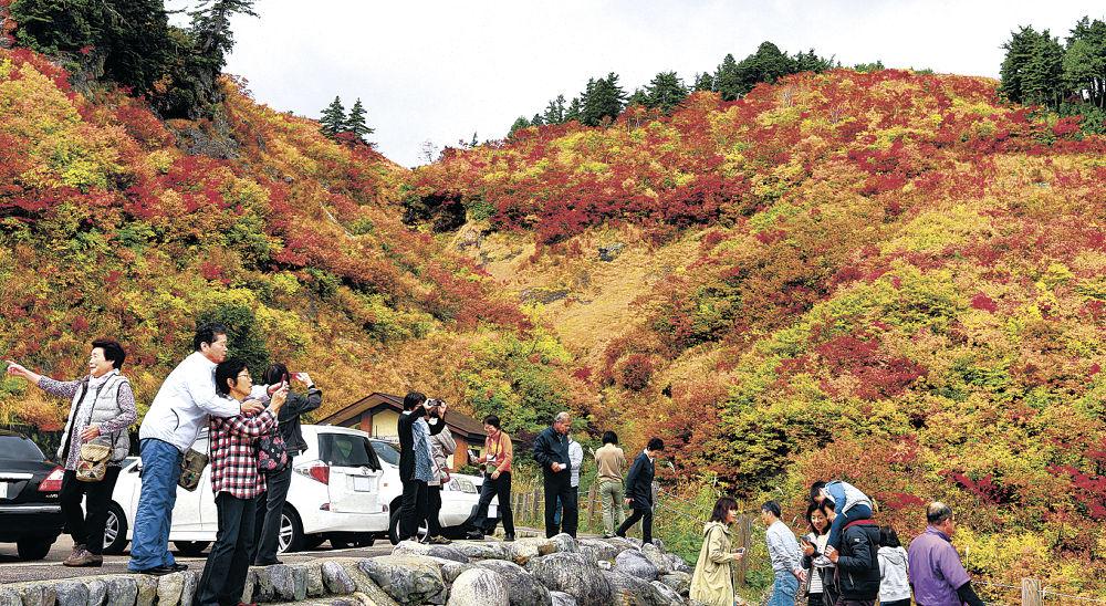 紅葉真っ盛りとなった三方岩駐車場周辺=白山白川郷ホワイトロード