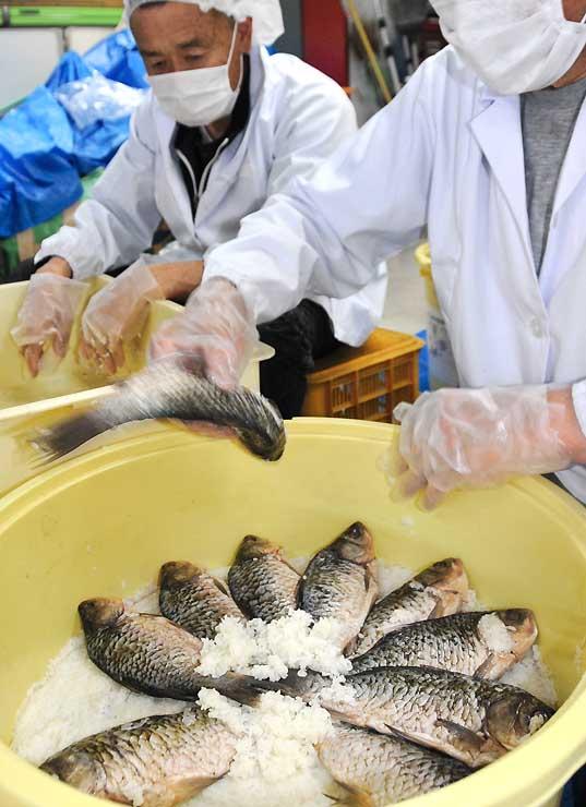 フナとご飯を漬け込む漁協組合員。鮨鮒祭りでは200人分の試食を用意する=昨年10月