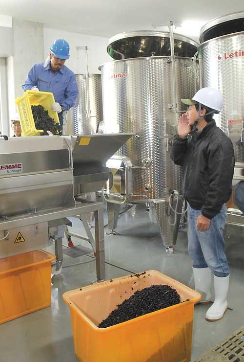 赤ワイン用ブドウをタンクに仕込む小西さん(右)ら