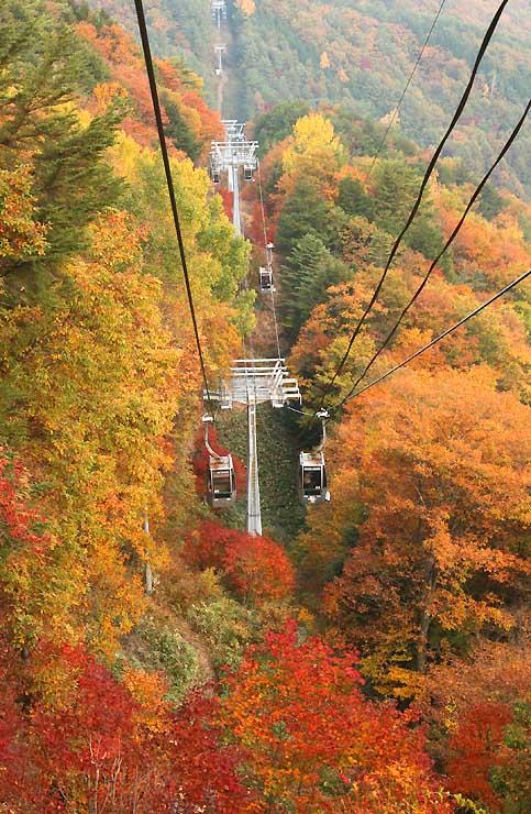 紅葉が見頃を迎えたロープウエー周辺