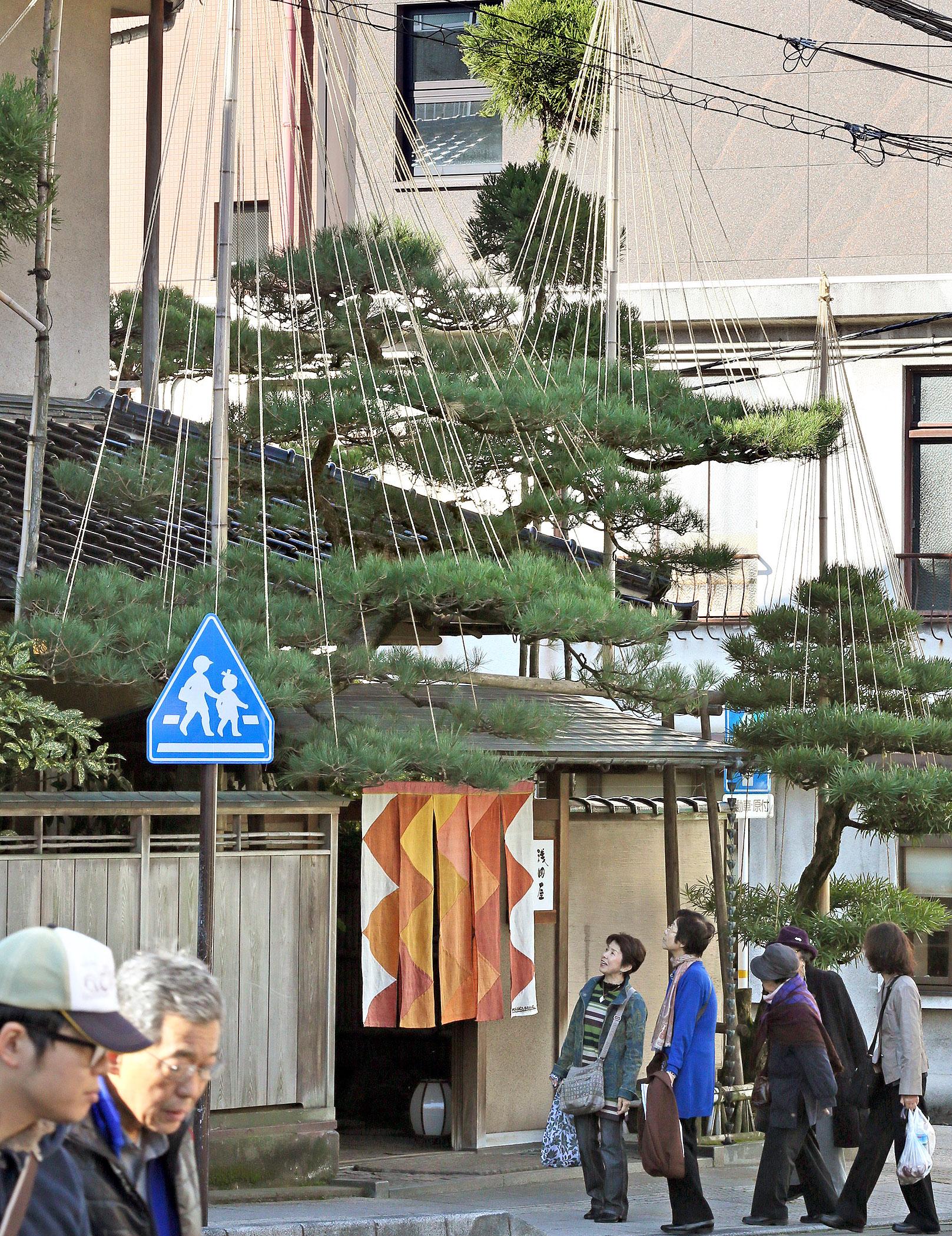 冬の風物詩「雪づり」の景色を楽しむ観光客=27日午前9時、金沢市十間町