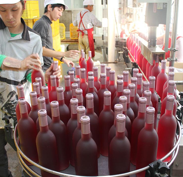 新酒ワインを瓶詰めする従業員