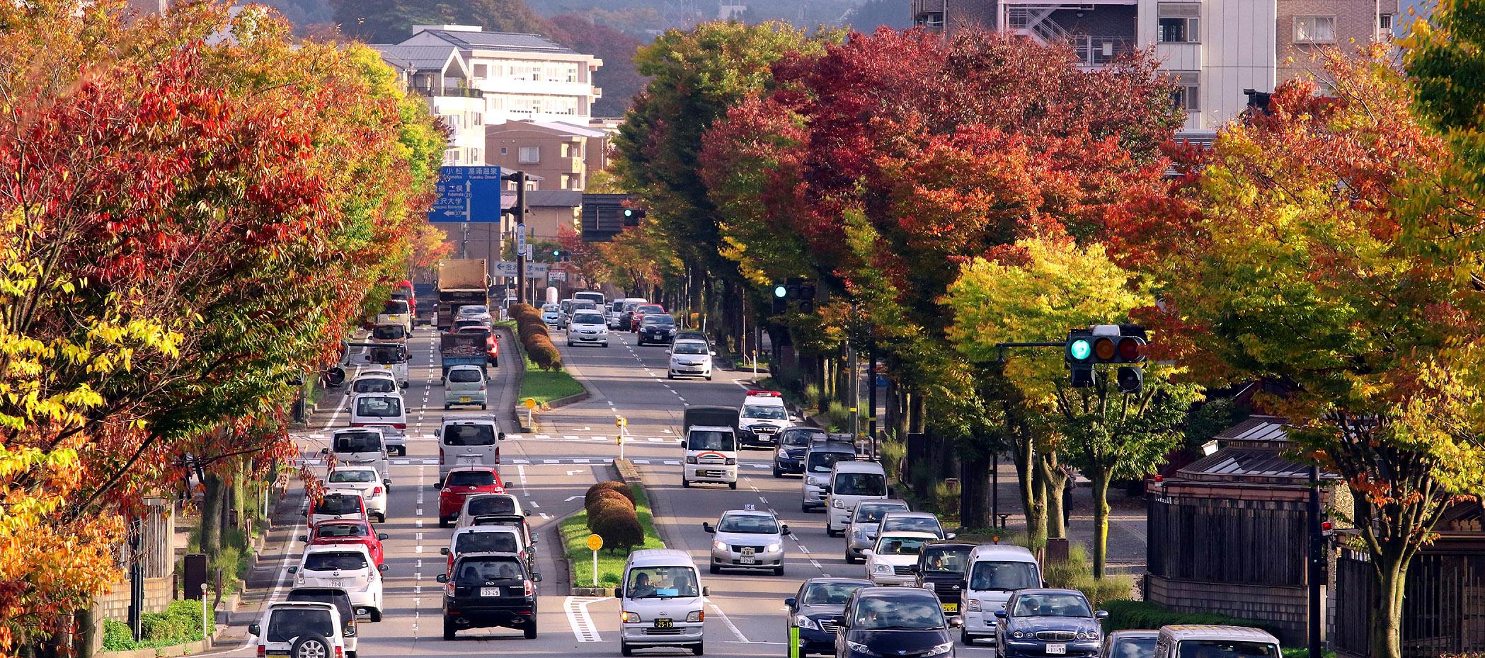 街路樹の紅葉が進む山側環状=金沢市もりの里2丁目