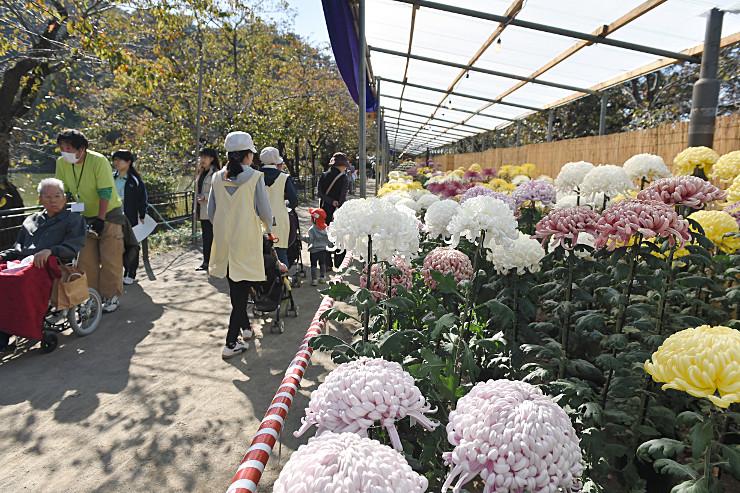 臥竜公園で開かれている信州須坂大菊花展