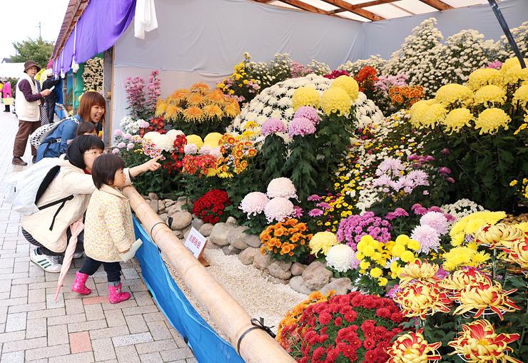 色とりどりの花で季節感や郷土色を彩る「南砺菊まつり」=南砺市園芸植物園