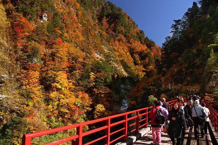 好天の下、黒部峡谷の紅葉を楽しむ観光客=欅平の奥鐘橋