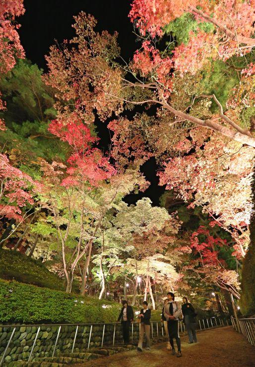 鮮やかに照らし出された紅葉(4日午後6時すぎ、柏崎市の松雲山荘)