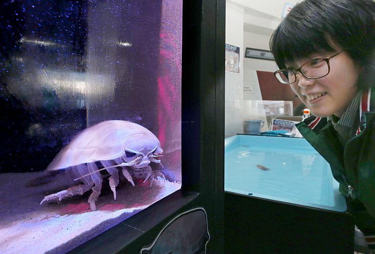 深海では死骸を餌にしているダイオウグソクムシ=5日、上越市立水族博物館