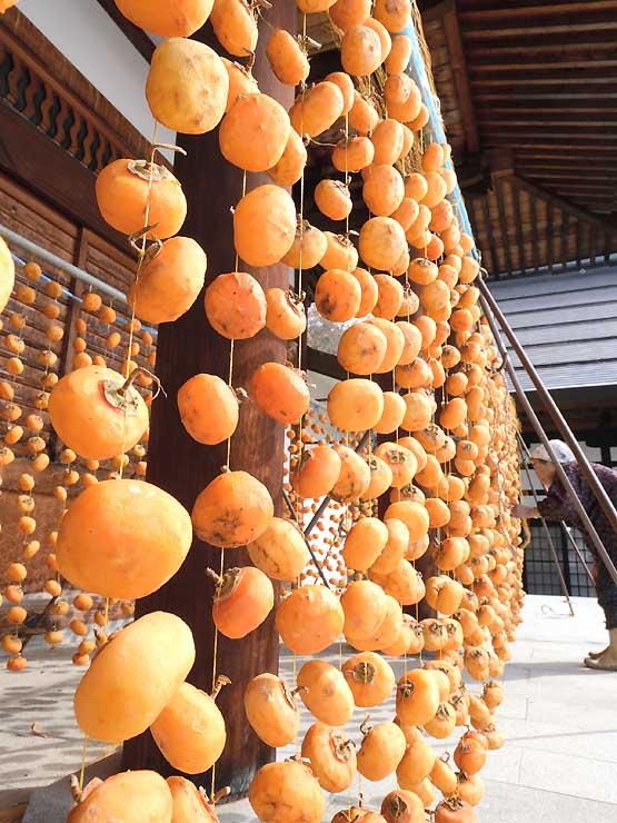 穏やかな日差しを浴びて、オレンジ色に輝く柿すだれ=中野市赤岩の谷厳寺