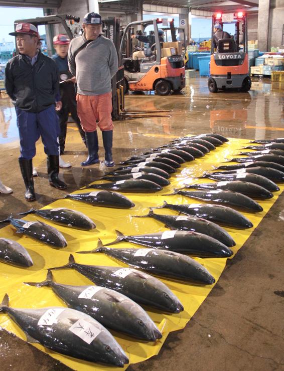 競りにかけるため、並べられたブリ=氷見魚市場