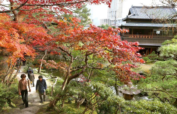 紅葉が見頃を迎えている旧斎藤家別邸庭園=13日、新潟市中央区