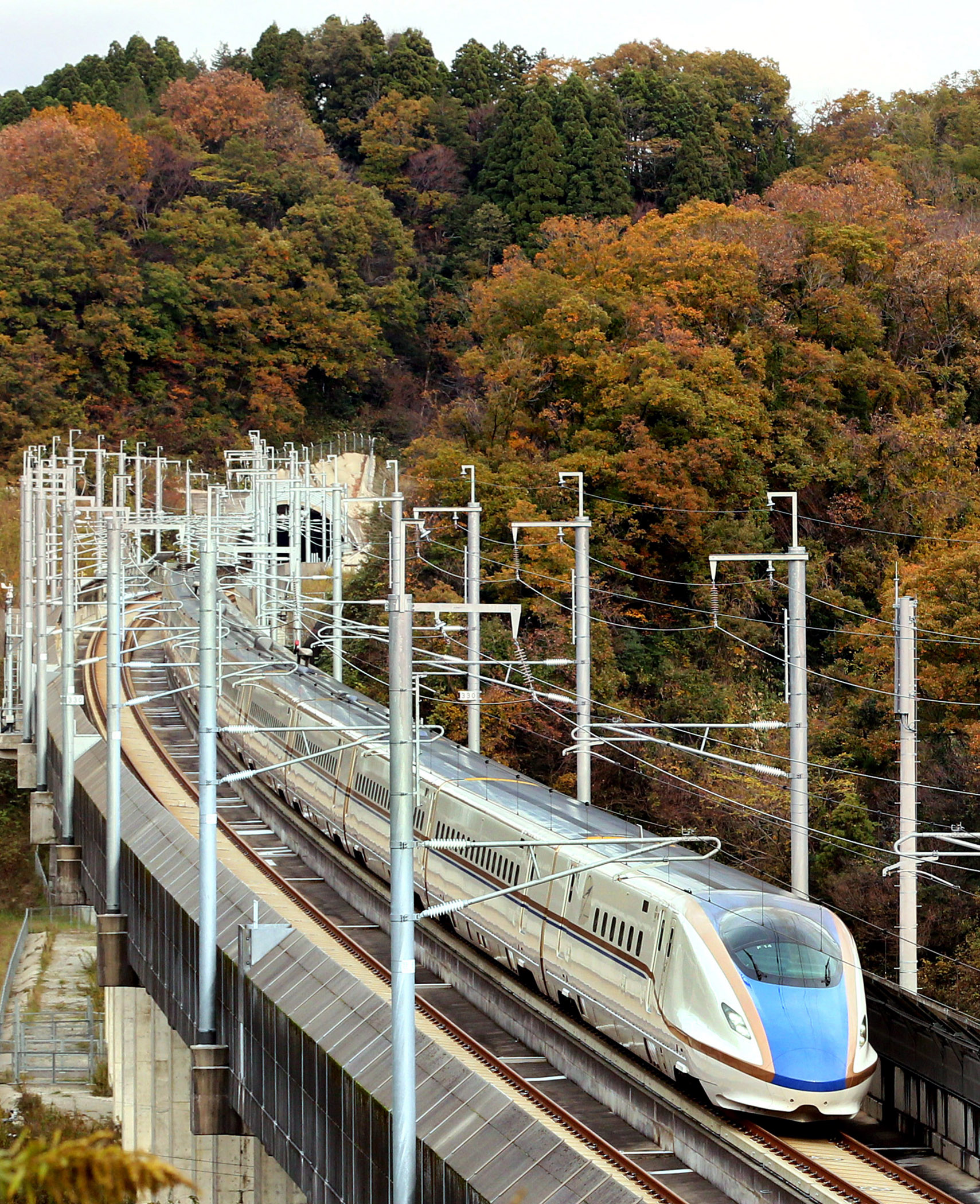 紅葉した山あいを疾走する北陸新幹線の車両=津幡町倉見