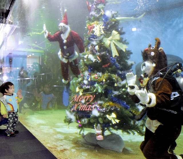 大水槽にクリスマスツリーがお目見えし、サンタやトナカイ姿の職員に手を振る子ども=19日、福井県坂井市の越前松島水族館