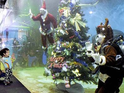 魚も躍るよXマス 坂井・越前松島水族館 水槽内にツリー設置