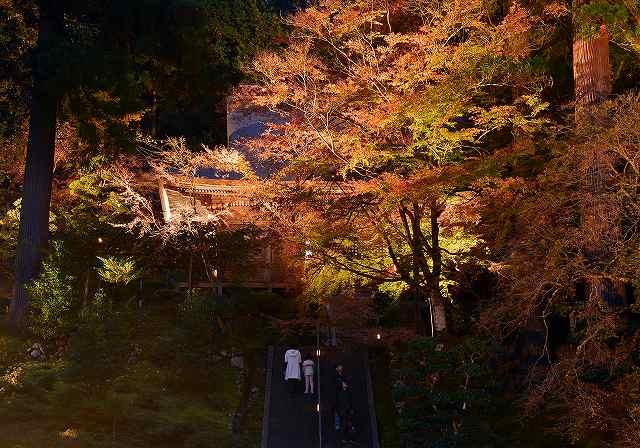 萬徳寺の本堂を背景に、ライトアップで幻想的に浮かび上がる紅葉した木々=21日午後5時10分ごろ、福井県小浜市金屋