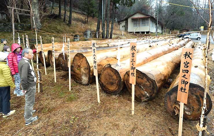 棚木場に並んだ8本の下社御柱用材=26日、下諏訪町