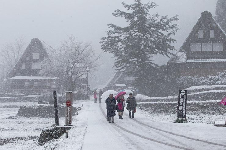 初雪が降り、雪化粧した合掌造り集落を散策する観光客=南砺市相倉