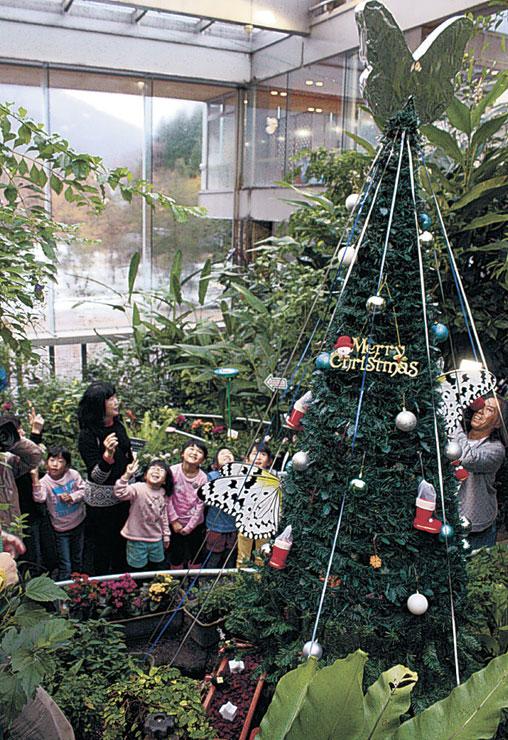 設置されたクリスマスツリーに向けてオオゴマダラを放す園児=白山市の県ふれあい昆虫館