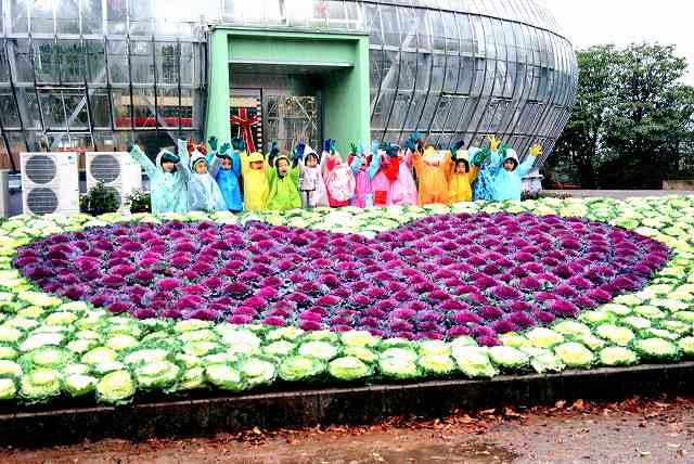 園児が葉ボタンを植え完成した、ハートを描いた花壇=27日、福井県坂井市の県総合グリーンセンター