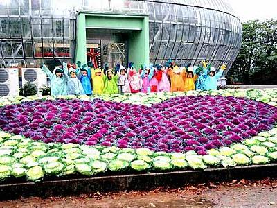 花壇に葉ボタンでハート描く 坂井市グリーンセンター