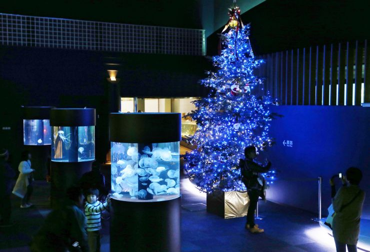 マリンピア日本海のホールを照らすクリスマスツリー=29日、新潟市中央区