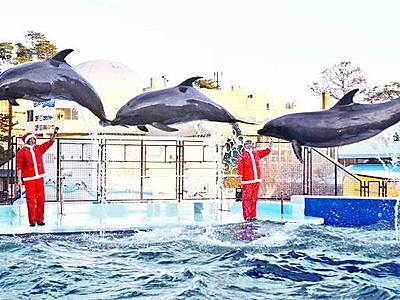 聖夜へ、イルカも踊る 松島水族館