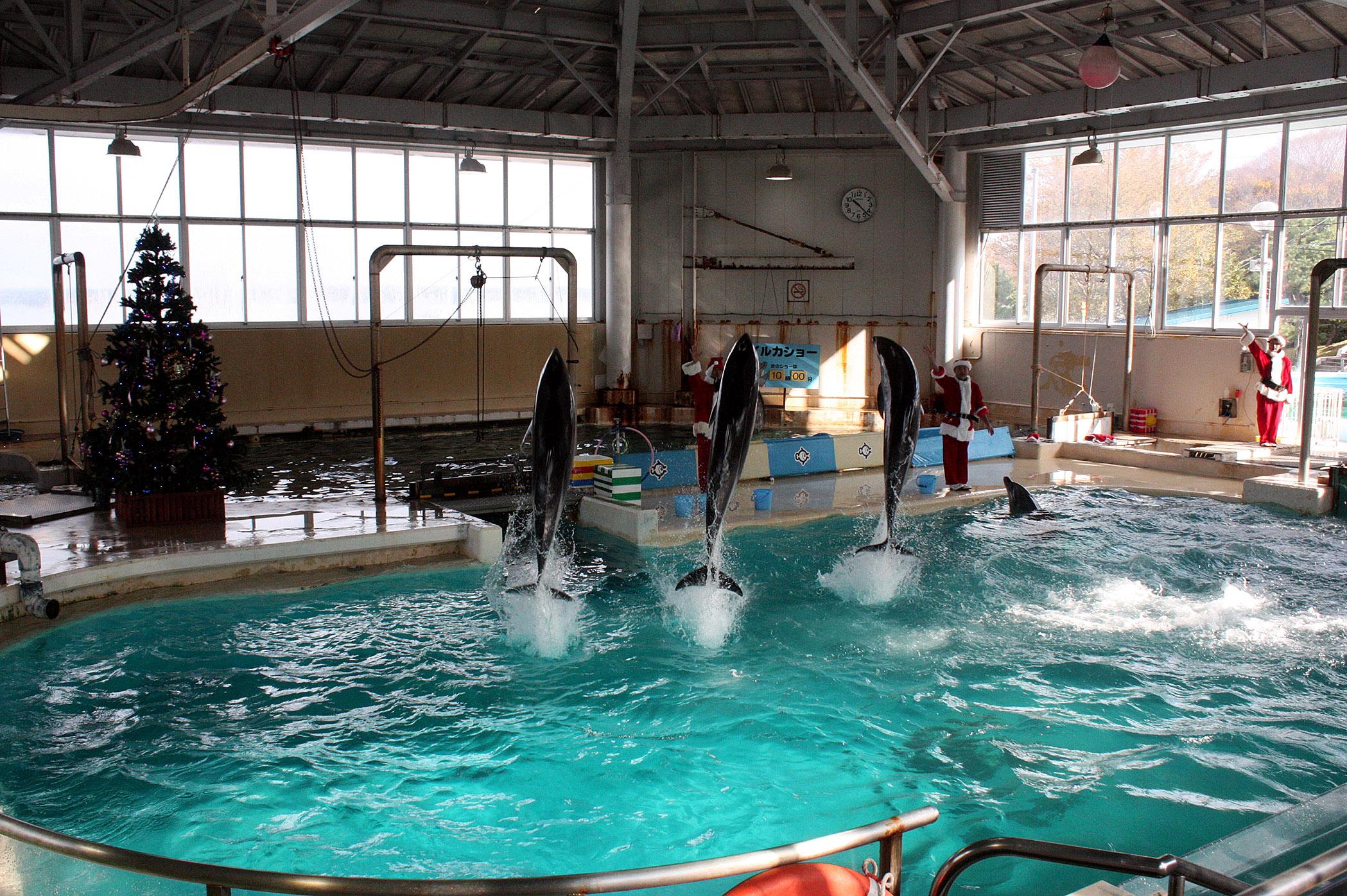 華麗なジャンプを見せるイルカ=のとじま臨海公園水族館
