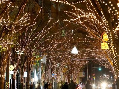 幸せの冬点灯 新潟・けやき通り