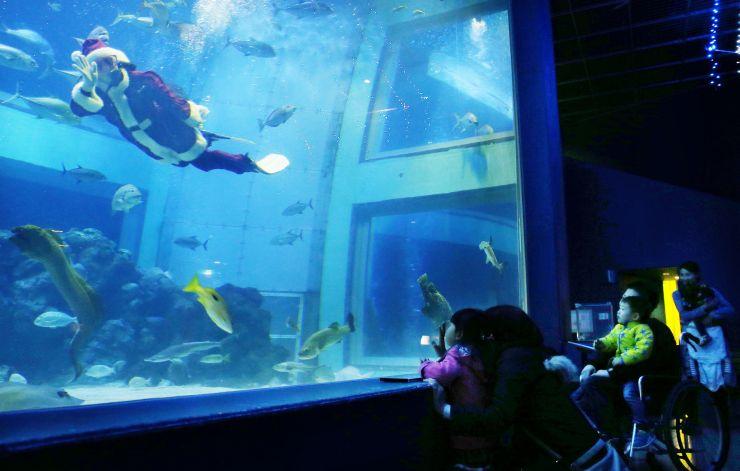 巨大水槽にやってきたサンタクロース。悠々と泳ぐ姿に子どもたちもくぎ付けだった=8日、上越市西本町4の市立水族博物館