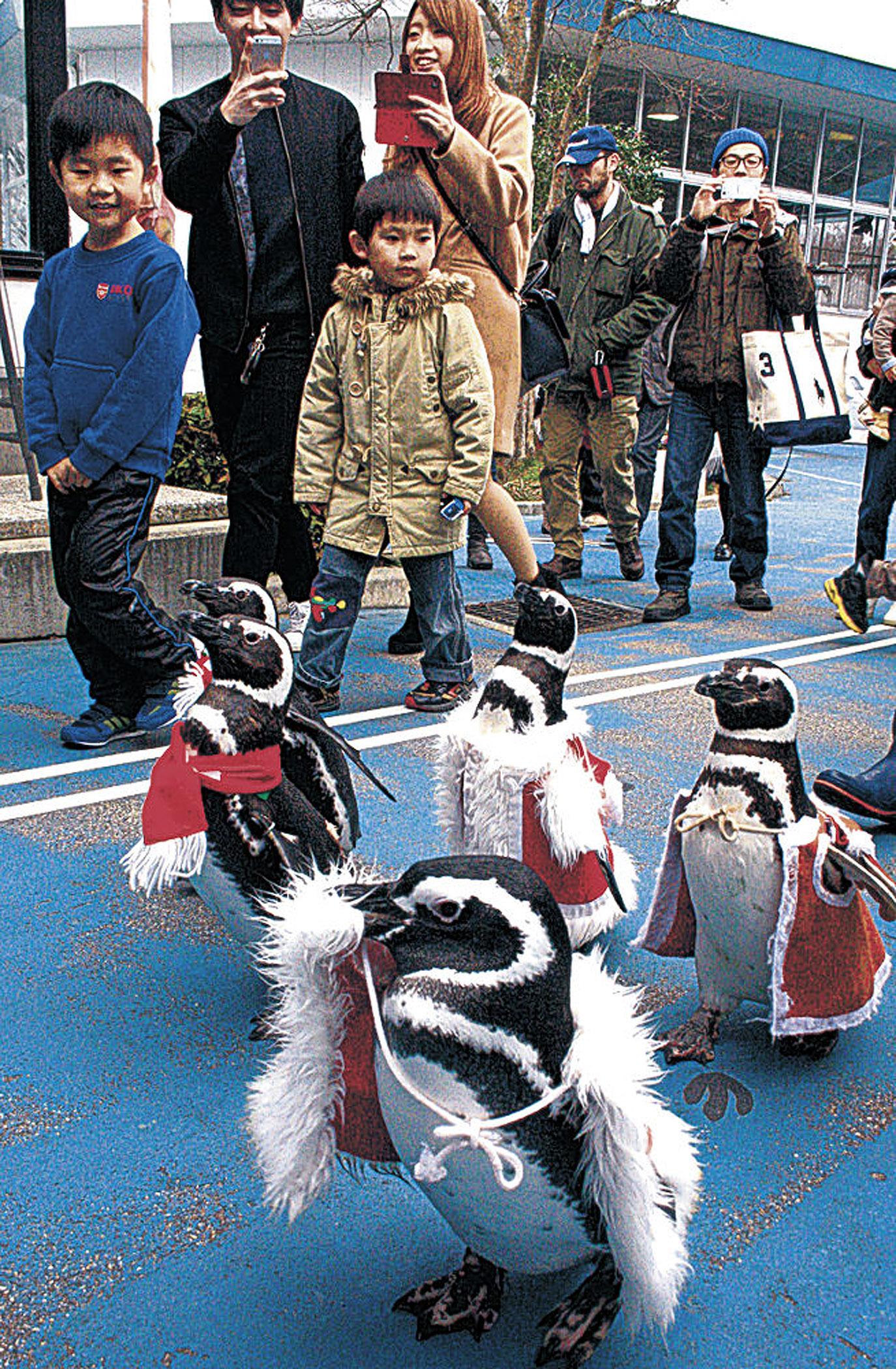 マゼランペンギンの行進を楽しむ来館者=七尾市ののとじま臨海公園水族館