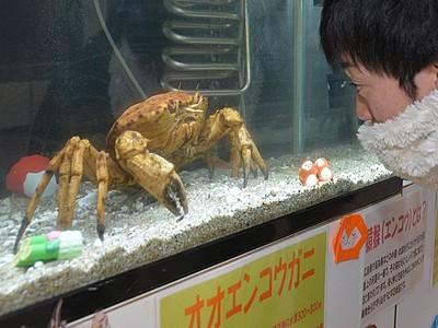 水中の「サル」見て! 越前松島水族館で干支企画展