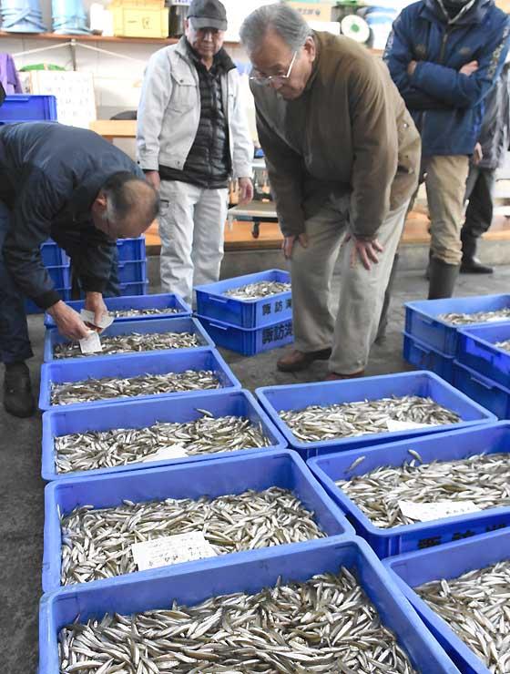 諏訪湖漁協事務所に並んだワカサギを品定めする諏訪地方の川魚店経営者ら