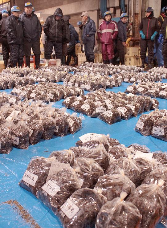 氷見魚市場に初出荷されたナガラモ=氷見市比美町