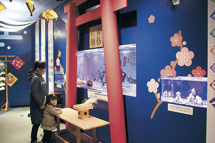 展示された魚を楽しむ来館者=七尾市ののとじま臨海公園水族館