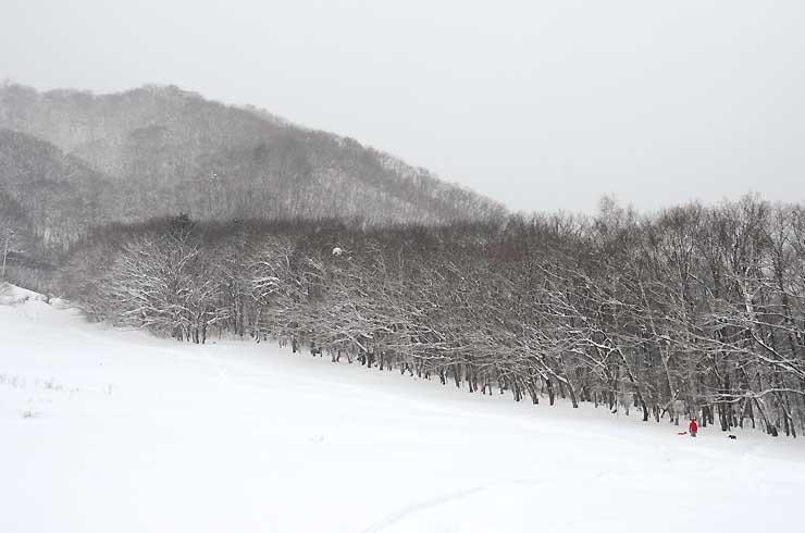 森トラストが取得した白馬八方尾根スキー場咲花ゲレンデ北側の土地=20日、白馬村