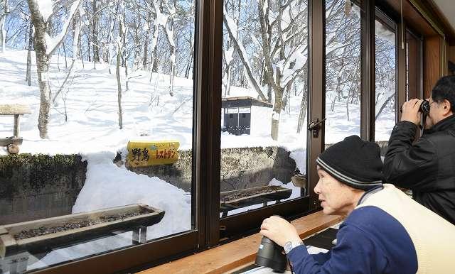 山が雪に覆われて野鳥たちが餌を食べに訪れるようになった「レストラン」=26日、福井県大野市の県自然保護センター